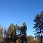 Atreenalin-seikkailupuisto-259